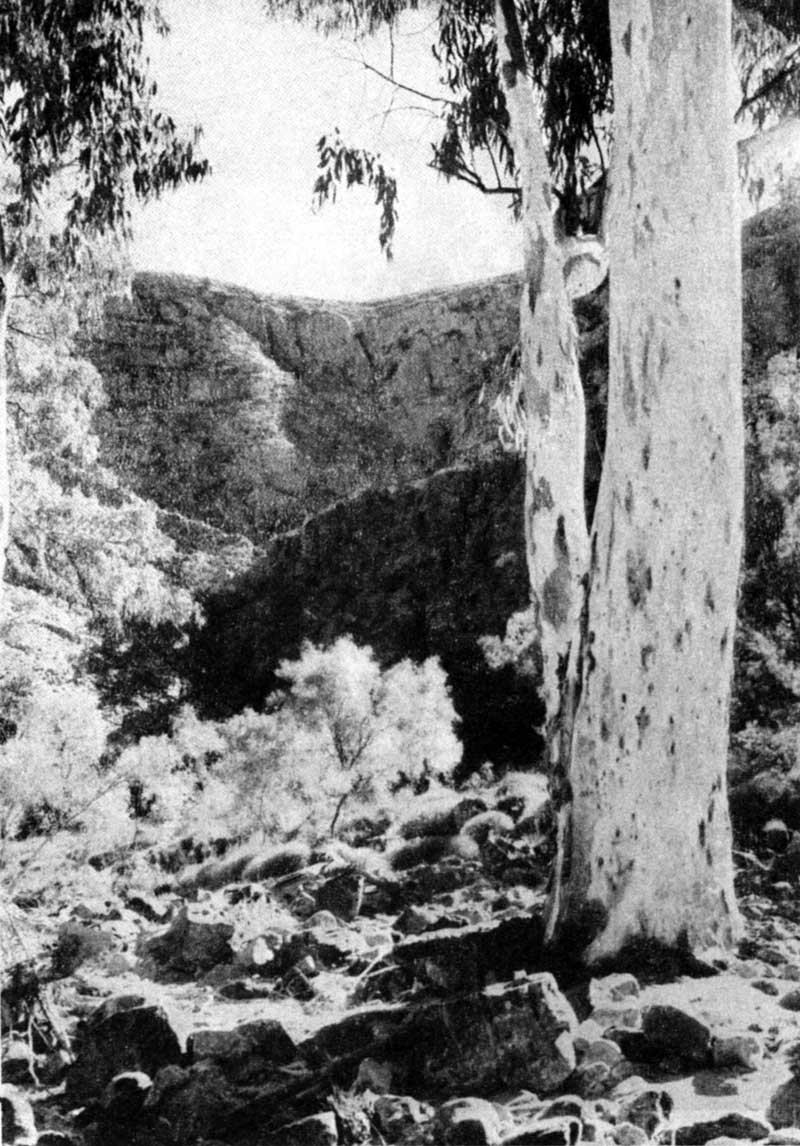 River gum in the Ormiston River bed